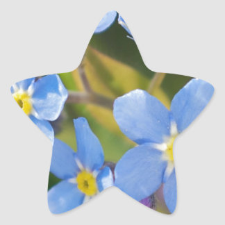 Peaceful Floral Forget Me Not Star Sticker