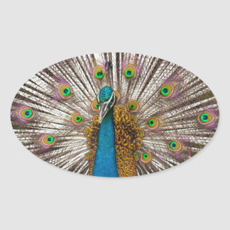 Peaceful Peacock Oval Sticker