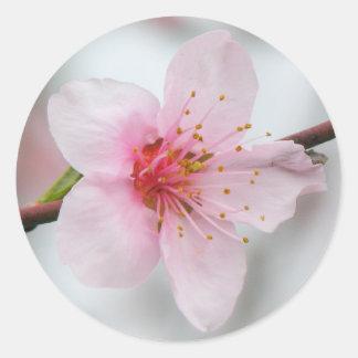 Peach Bloom Classic Round Sticker