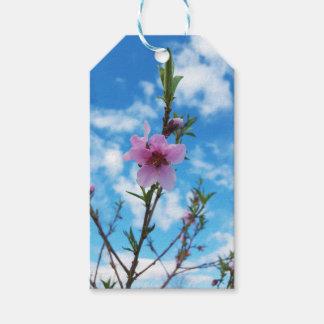 Peach Blossom Sky Gift Tags