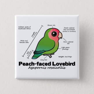 Peach-faced Lovebird Statistics 15 Cm Square Badge