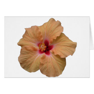 Peachy Hibiscus Card