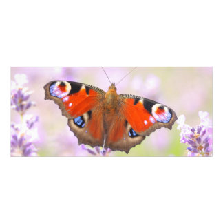 peacock butterfly over lavender full color rack card