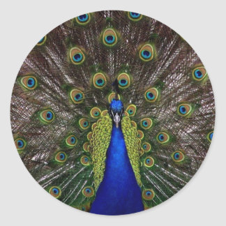 Peacock Classic Round Sticker