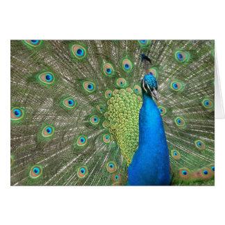 Peacock Display Card