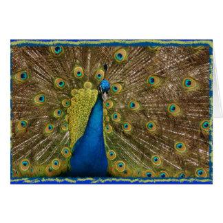 PEACOCK - DISPLAYING CARD