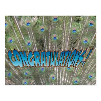 Peacock Feathers Congratulations Postcard Blue