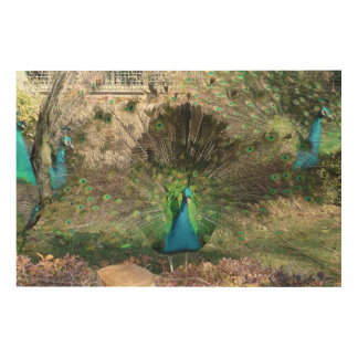 Peacock Wood Wall Decor