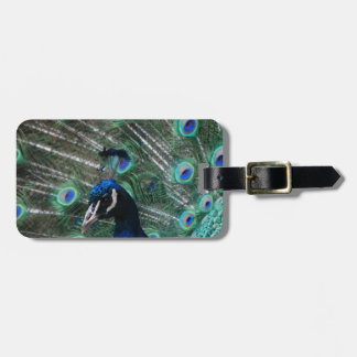 Peafowl Bird Luggage Tag