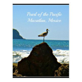 Pearl of the Pacific Mazatlan Mexico Bird Postcard