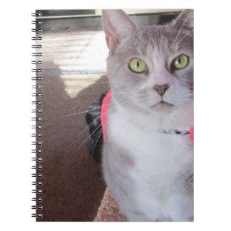 Peeking Cat notebook