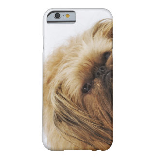 Pekingese Hund, nahes hohes Barely There iPhone 6 Case