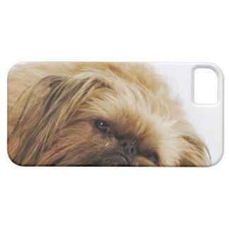 Pekingese Hund, nahes hohes iPhone 5 Covers