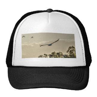 PELICAN FLYING RURAL QUEENLAND AUSTRALIA CAP