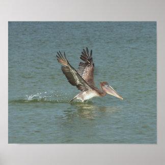 Pelican Landing in Surf Canvas Print Version B