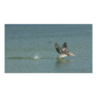 Pelican Landing on Surf Canvas Print