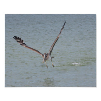 Pelican Takes Off Canvas Print