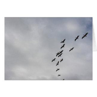 Pelicans over Havana Card
