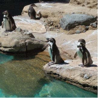Penguins Standing Photo Sculpture