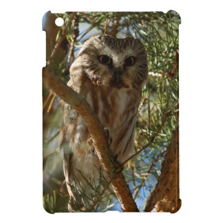 Perched Northern Saw-whet Owl iPad Mini Cover