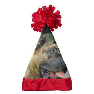 perro de presa canario.png santa hat