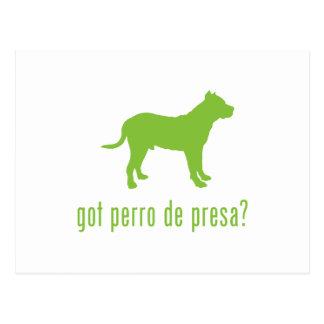 Perro de Presa Canario Post Cards