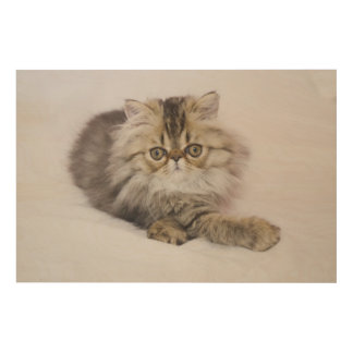 Persian Cat, Felis catus, Brown Tabby, Kitten, Wood Wall Art