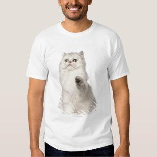 Persian cat sitting tees