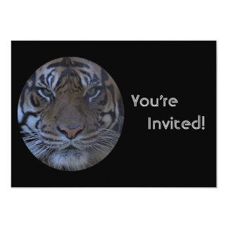 Personalized Tiger Zoo Birthday Party Invite