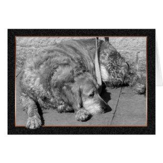 Pet Dog Sympathy Card
