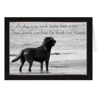 Pet Dog Sympathy Card - Touch Our Hearts