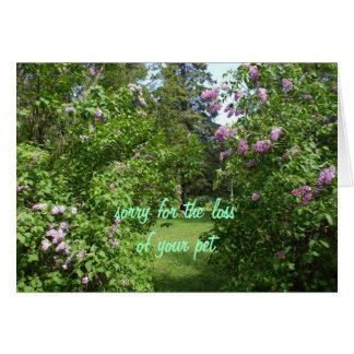 Pet Sympathy-lilac Bush Card