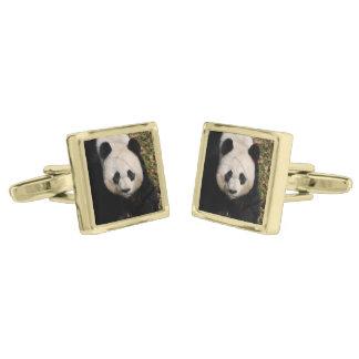 Petulant Panda Bear Gold Finish Cuff Links