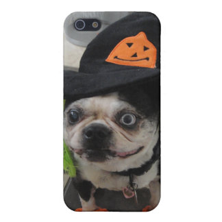Petunia the witch Boston Terrier Case For The iPhone 5