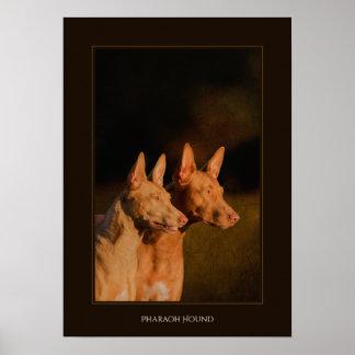 Pharaoh Hound Poster