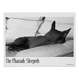 Pharaoh Hound | The Pharoah Sleepeth Poster
