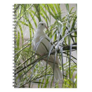Photo of beautiful white dove notebooks