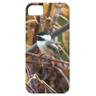 Photo of cute Black-Capped Chickadee iPhone 5 Cases