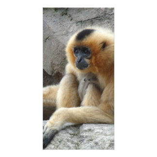 Photo of Orange and Black Gibbon Relaxing on Cliff Card