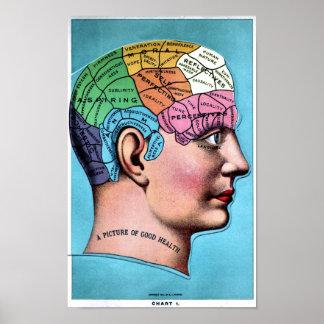 Phrenology Poster