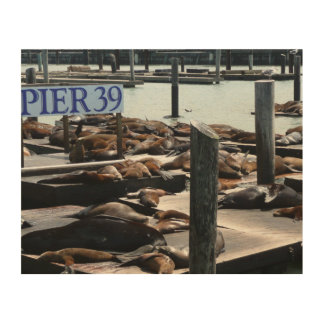 Pier 39 Sea Lions in San Francisco Wood Prints