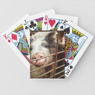 Pig deck of cards