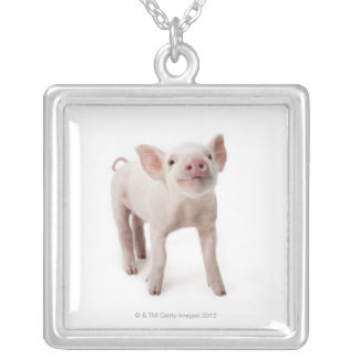 Pig Standing Looking Up Silver Plated Necklace
