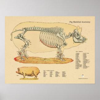 Pig Veterinary Skeletal Anatomy Chart Poster