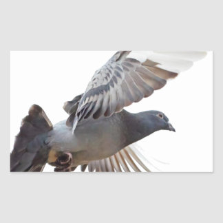 pigeon fly to love joy peace rectangle stickers