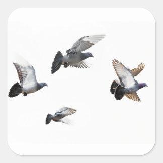 Pigeons Birds Sky Nature Peace Love Destiny Square Sticker