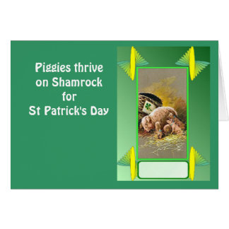Piggies thrive on Shamrock for St Patrick's Day Greeting Card