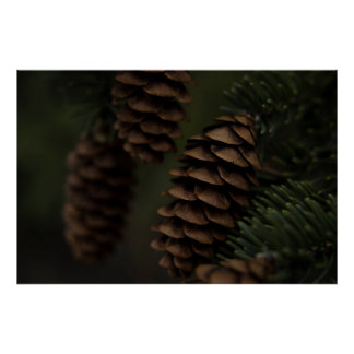 Pinecones in the Shade Nature Photography Poster