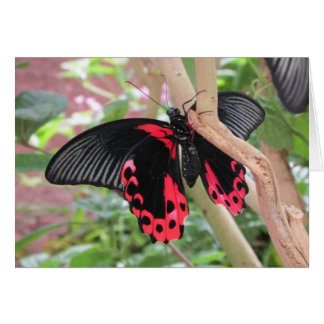 Pink and Black Butterfly on Branch Notecard Greeting Card