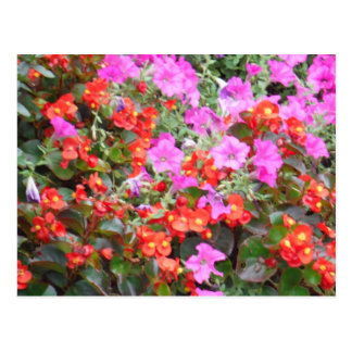 Pink and Orange flowers Post Cards
